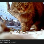 cat cam photogoraphy by Seattle based cat/artisit Cooper.