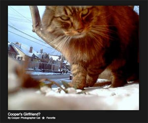 cat cam photography by Seattle based cat/artisit Cooper.